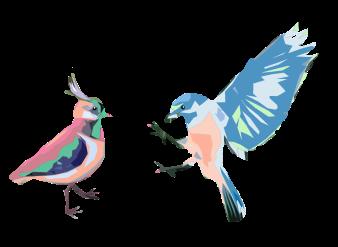 Irish and Missouri Birds